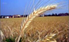 Riforma agricoltura bio, continuano le trattative