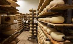 Pecorino Toscano DOP, crescono mercato nazionale ed export. Fatturato da 50 milioni di euro